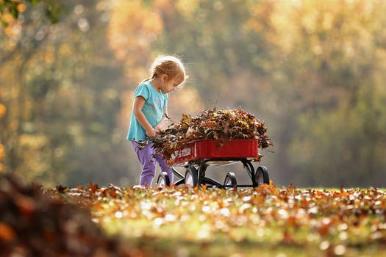 Make Organic Fertilizer at Home (4)